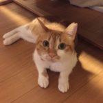【災難】にゃんズのゴールデンウィーク