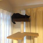 ネコの共同作業 おねえちゃんはぼくが守る!