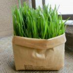 家庭内ミニ温室 ネコから猫草を守れ!・1