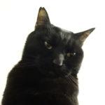 ピーターの体調不良まとめ【ネコが食べない。元気なのに】