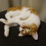 くるみの変な姿勢 ネコが体育座りをした?