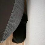 ネコのお留守番 1泊2日で家を守れ!