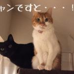 【悲報】マンション断水事件・1
