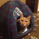新しいねこハウス「ねころん」導入。その使いごこちとネコの反応とは?