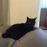 全国のネコさん、急な暑さに注意です。黒猫ピーターが夏バテしました(^_^;)