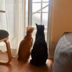 ネコの脱走防止に、網戸ストッパーをつけました!外からは開いちゃうけど(^_^;)