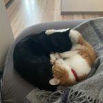 【イタリアに行こう♪番外編】6日間の旅行中ネコたちはどうしていたか。留守番ストレスでピーターに異変が!